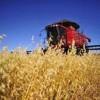 IBGE aponta safra recorde de 163 milhões de toneladas em 2012