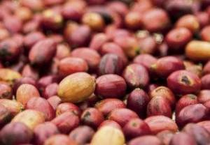 Consumo de café no Brasil deve ser de 20,4 milhões de sacas