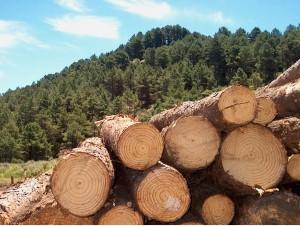 Produção de madeira para setor de papel e celulose cresce quase 9% em 2011, diz IBGE