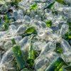 Iniciativa privada une forças para reciclagem de vidro no DF